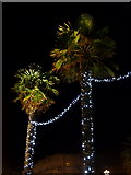 SZ0891 : Bournemouth: Christmassy palm trees by Chris Downer