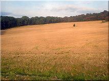 SK4564 : Stubble field near Cross Wood by Trevor Rickard