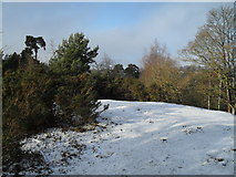 SU9948 : Snow still laying on the summit of St Catherine's Hill by Basher Eyre