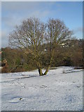SU9948 : Winter trees on St Catherine's Hill by Basher Eyre