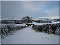 NZ5712 : Roseberry Lane in the snow by Philip Barker
