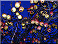 TA2824 : Unclaimed Fruit by Andy Beecroft