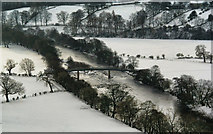 NY9724 : River Tees by Peter McDermott