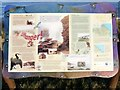 NZ3965 : Decorative information board above Marsden Bay by Andrew Curtis