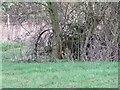 SU3788 : Abandoned  in the hedge by Bill Nicholls
