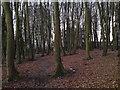 SU4712 : Tower Blocks & The Woodland Walks by dinglefoot
