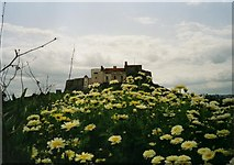 NU1341 : Lindisfarne Castle from the Gertrude Jekyll garden by David P Howard