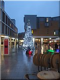 SX9292 : Christmas Tree 2009, Bedford Street, Exeter by David Smith