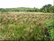 G8307 : Marshy field at Annagh by Oliver Dixon