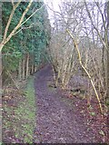 TR0254 : Bridleway enters Badlesmere Park Wood by David Anstiss