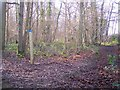 TR0953 : Bridleway and track junction in Denge Wood by David Anstiss