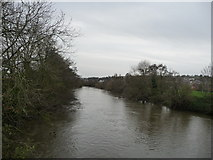 SX9193 : Exeter : The River Exe by Lewis Clarke