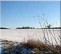 TM3695 : Snow-covered field south of Hales Hall by Evelyn Simak