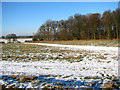 TM3696 : Snowy tracks past the copse west of Hales Hall by Evelyn Simak