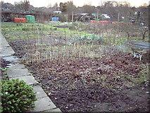 SP3177 : Earlsdon allotment plot in winter. by Peterson Cobbett