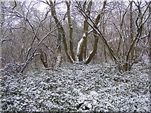 SO9194 : Snowy Coppice by Gordon Griffiths