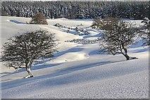 NZ5812 : Stream Near Slacks Wood by Mick Garratt