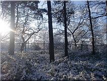 TQ2996 : Trent Park, London N14 - in the snow by Christine Matthews