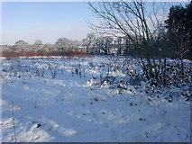 TQ2996 : Field in Trent Park, London N14 by Christine Matthews