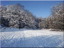 TQ2996 : Winter wonderland in Trent Park, London N14 by Christine Matthews