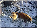 SN1306 : My Dogs in the snow. by Pauline Evans