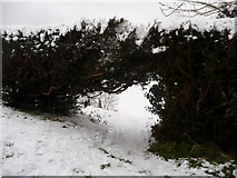 SS9412 : Tiverton : Bakers Hill - Gap in the Hedge by Lewis Clarke