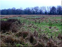 ST8707 : Waterlogged fields by the River Stour by Nigel Mykura