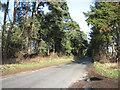 TF7801 : Approaching Russel's Plantation by Gooderstone Warren by Evelyn Simak