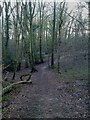 SU4713 : One of the many footpaths through Telegraph Woods by dinglefoot