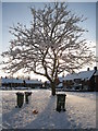 SU6352 : Snow clad tree - Norden Close by Given Up