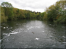 SU9085 : The Thames at Cookham by Given Up
