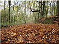 SD6220 : Brinscall woods by anthony neve