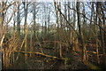 TQ4036 : Coppiced trees by the Forest Way by N Chadwick