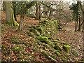 SO5312 : Wall, Ridge Wood by Derek Harper