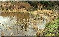 J2967 : The Lagan canal near Dunmurry (3) by Albert Bridge