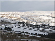 NY8048 : West Allen Dale at Hartleycleugh (3) by Mike Quinn