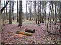 TL9483 : Rotting wood in Thorpe Woodlands by Evelyn Simak