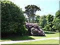 SZ5479 : Garden at Appuldurcombe House, Isle of Wight by Christine Matthews