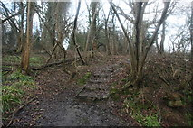 TQ4540 : Steps on the Sussex Border Path by N Chadwick