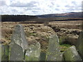 SD6916 : Looking south over marshy moor, Longworth by Andrew Gritt