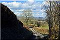 ST1075 : High banked lane - Coedarhydyglyn by Mick Lobb