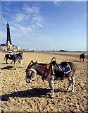 SD3036 : Donkeys at Blackpool by Mr Jack
