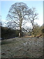NZ1214 : Bottomland trees by Andy Waddington