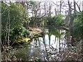 SU3816 : Neighbourhood pond by David Martin