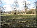 SU6551 : Woodland clearing by Sandy B