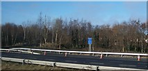 O1740 : Shelter belt along the M1 at Santry by Eric Jones