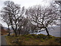 NM6826 : Trees and mossy rocks by Andy Waddington