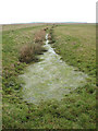 TG3902 : A ditch full of grass in the Limpenhoe marshes by Evelyn Simak