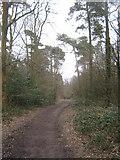 TQ4251 : The Greensand Way in Limpsfield Chart by David Anstiss