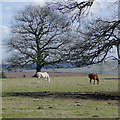 SO8280 : Grazing near Blakeshall, Worcestershire by Roger  Kidd